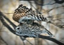 Owlflight2