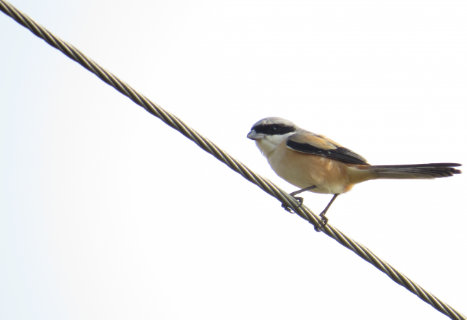 birdy2