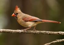 Bird-2014-2776