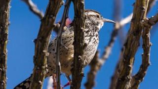 Birdwatching-165