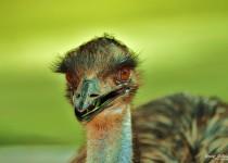 EMU3-copy