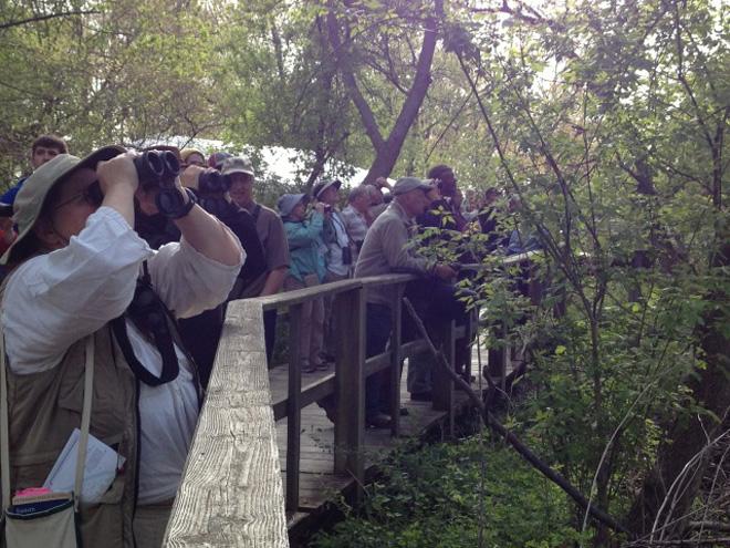 magee-marsh-birders