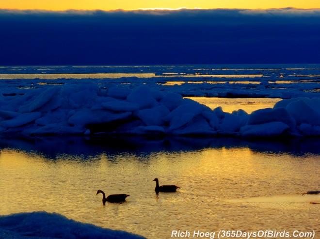 094-Birds-365-Geese-Sunrise-1