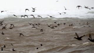 110-Birds-365-Surfing-Redheads-4