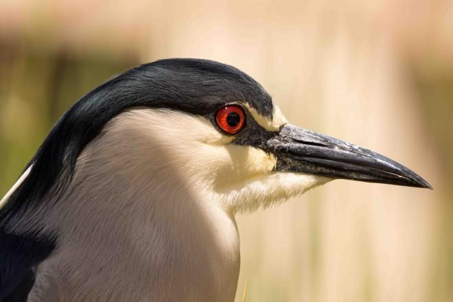 Birdwatching-167