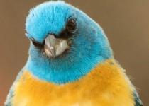 Birdwatching-168