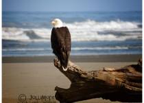 eagle1small1