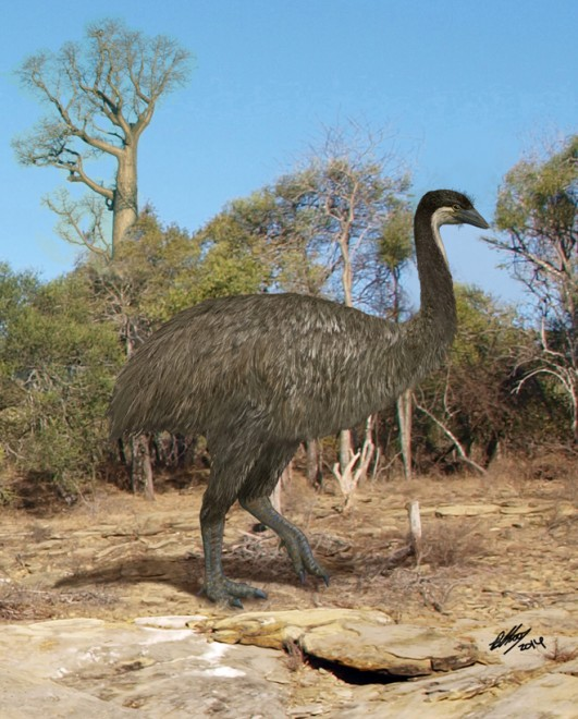 An elephant bird wandersthrough the spiny forest of ancient Madagascar. Painting by Brian Choo