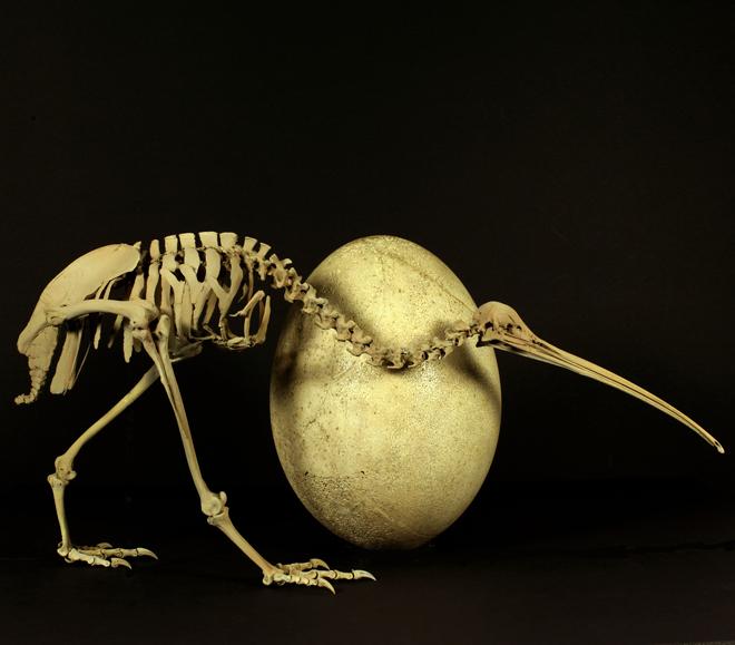 kiwi-egg-660