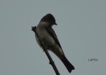 Aviary-Photo_130473135758672956