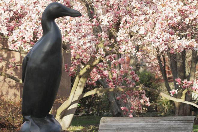 Great Auk sculpture at the Smithsonian. Photo by Todd McGrain