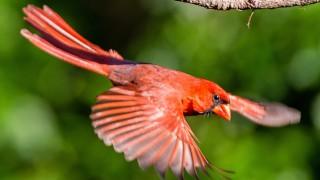 cardinal-pittman-660