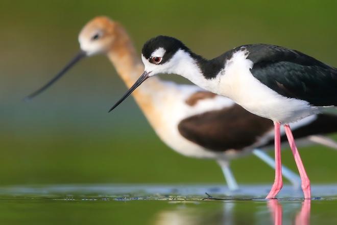 Fieldcraft-Hopton-shorebirds-660