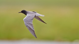 bird-113