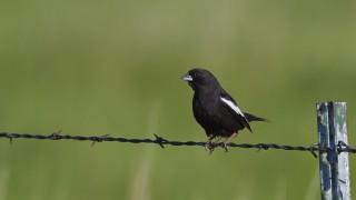 bird-135