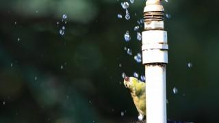 AMGO-rainbird_0959