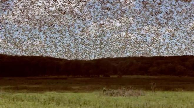 Billions-flock