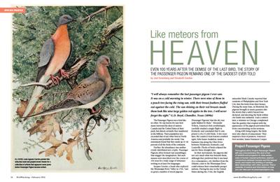 LikeMeteors-Feb14