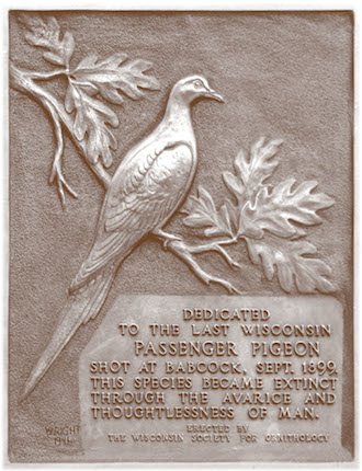 "The plaque on the Passenger Pigeon Monument. Artist Owen Gromme sketched the bird. Ornithologist A. W. Schorger drafted the inscription: ""Dedicated to the last Wisconsin Passenger Pigeon shot at Babcock, Sept. 1899. This species became extinct through the avarice and thoughtlessness of man."" Reproduced with permission of the Wisconsin Society for Ornithology."