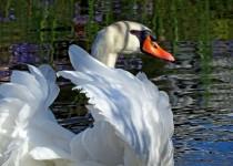 birdwatching2014-3