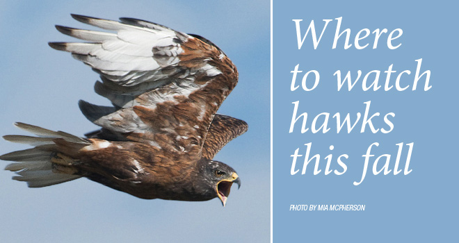 hawk-watch-rotator