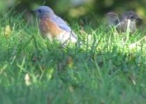 Multi-birds