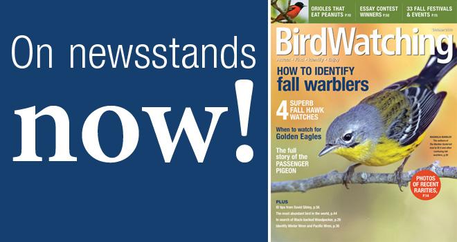 Oct-14-newsstands