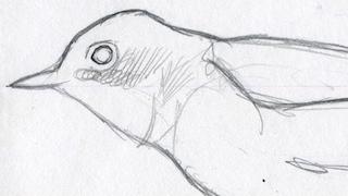 Sibley Sketch_320x180
