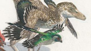 dinosaur-bird-illustration-320x180
