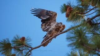 Eagle1_edited-1