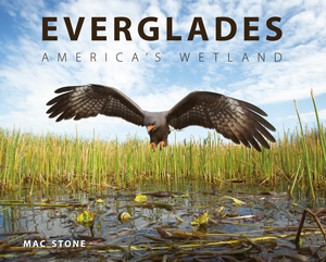 Everglades_300