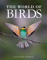 World-of-Birds-165