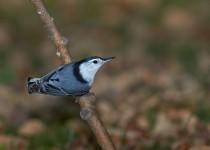 bird-34