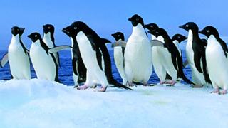 penguins-320