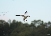 watermarked-Bird-Sanctuary-047