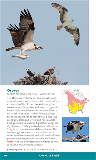 Osprey, page 94 of The Stokes Essential Pocket Guide to the Birds of North America, by Donald and Lillian Stokes.