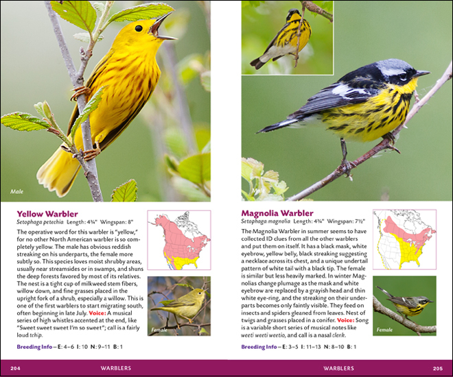 Yellow Warbler and Magnolia Warbler, pages 204 and 205 of The Stokes Essential Pocket Guide to the Birds of North America, by Donald and Lillian Stokes.