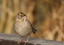 watermarked-Bird-Sanctuary-030