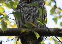 watermarked-Bird-Sanctuary-278