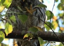watermarked-Bird-Sanctuary-291