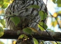 watermarked-Bird-Sanctuary-295