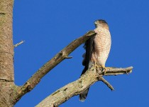 watermarked-Bird-Sanctuary-329-Copy-2