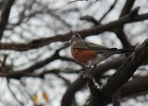 woodpecker-robinsetc.11-1-14-004