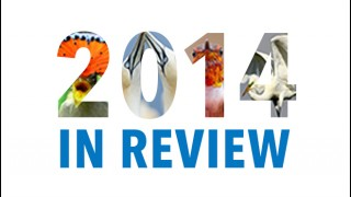 2014 in Review_Box