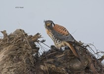 Kestrels-Christmas-dinner-8