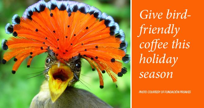 coffee-holiday-rotator