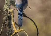 cosumnes-river-preserve-20141226-0030-Edit