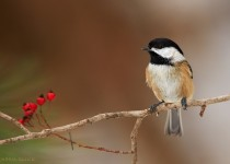 moc-bird2