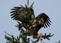 watermarked-Bird-Sanctuary-005-Copy