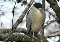 watermarked-Bird-Sanctuary-208-Copy